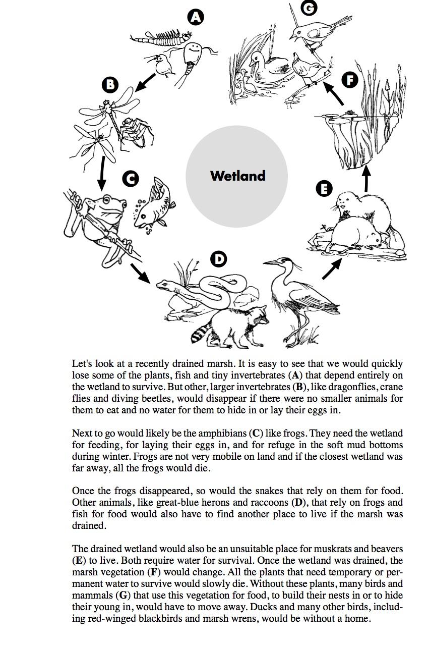 decomposers worksheets for kids | Archbold Biological Station ...