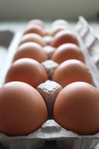 van H acres - fresh eggs in Langley, BC