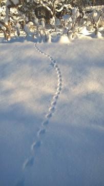 teeny tiny critter tracks