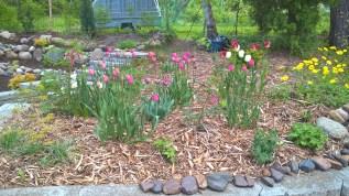 woodland garden 29 May 2017