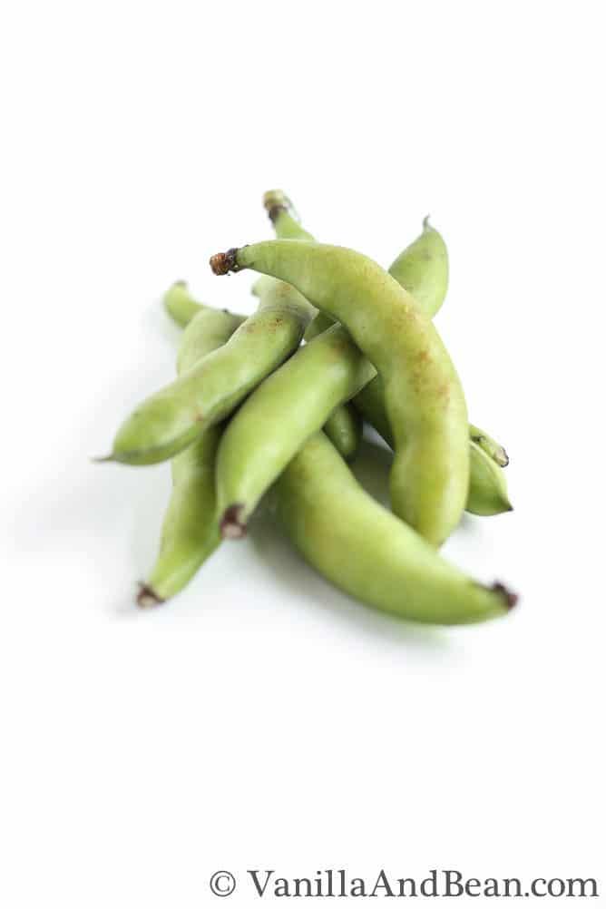 Fava Beans   VanillaAndBean.com