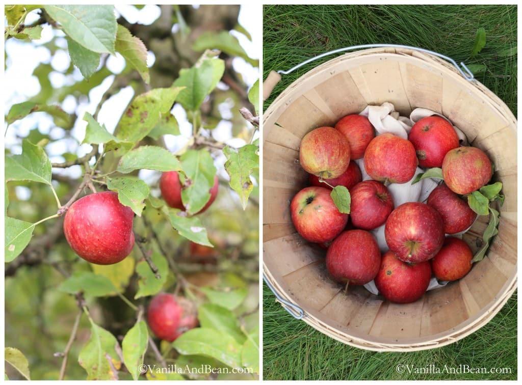 Bourbon Apple Cranberry Cobbler with Anise and Vanilla Bean | VanillaAndBean.com