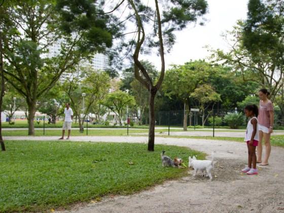 Bishan Park Dog Run   Vanillapup
