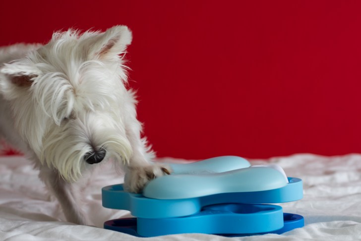 Mental Training Toys For Dogs