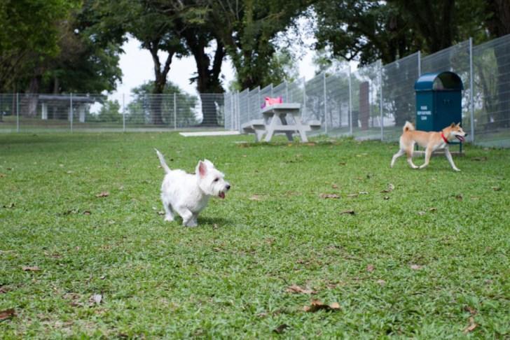 Sembawang Park Dog Run | Vanillapup