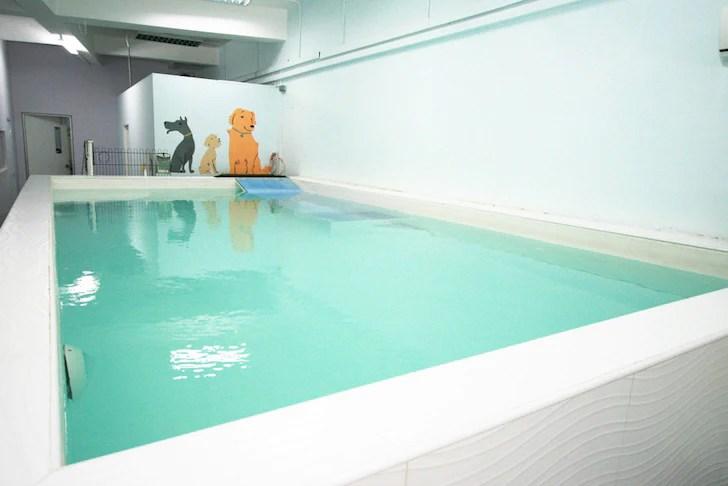 6 Dog Swimming Pools in Singapore | Canine Wellness & Rehab Indoor Pool | Vanillapup
