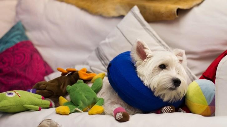 Dog Protective Collars Review - KONG Cloud