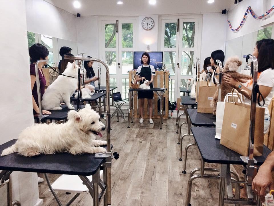 Furcraft Academy Fun workshop | Vanillapup
