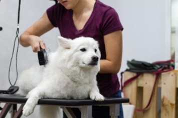 Furcraft Academy Fun Workshop - Brushing