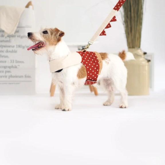 Oh Pop Dog Apparel Harness Walk Set
