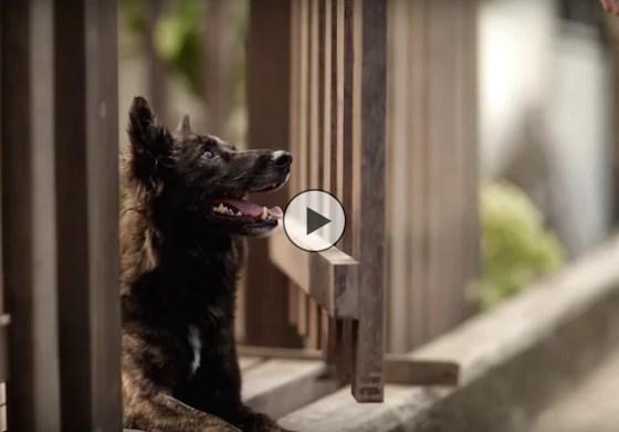 KTB Thai Dog Video Ad | Vanillapup
