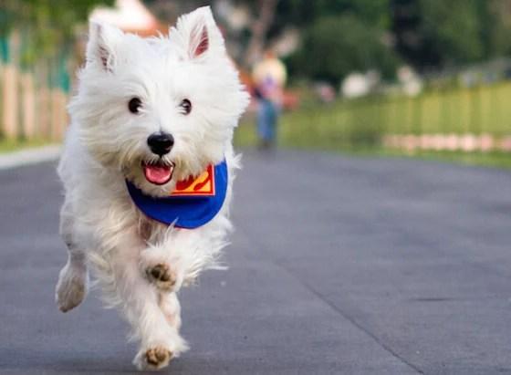 Dog Recall Training   Vanillapup