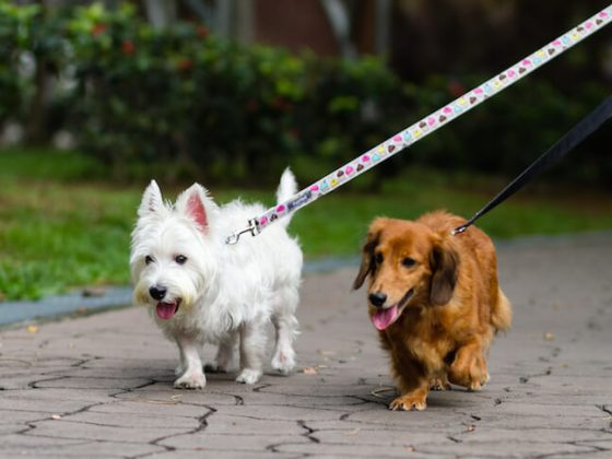 Dogs Walking On-leash | Vanillapup