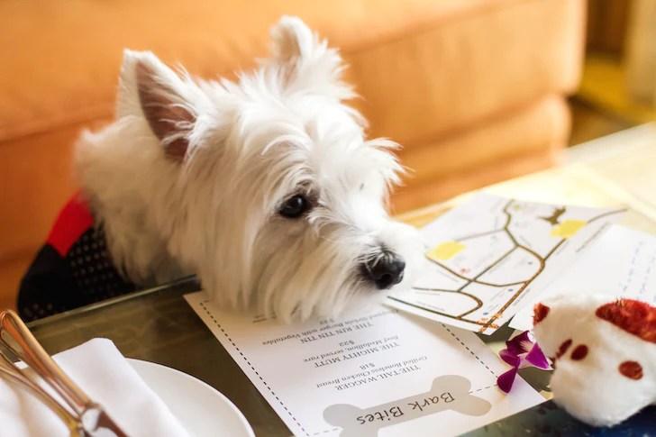 Pet-friendly Regent Singapore Hotel Staycation Latte Browsing | Vanillapup