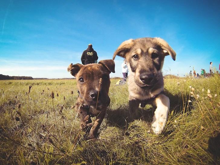 Puppy friends Picjumbo   Vanillapup