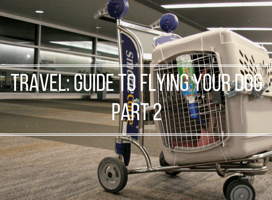 Pet Travel: Flying Your Dog Guide Part 2   Vanillapup