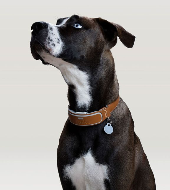Link AKC Smart Collar | Vanillapup