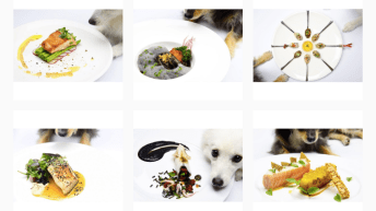 Instagrammer Whips Up Gourmet Masterpieces and Lets Her Pets Pose With Them