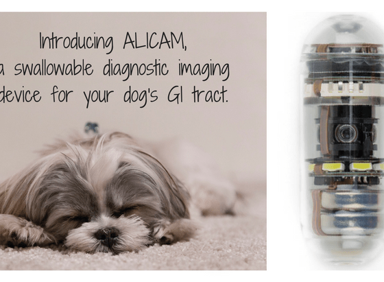 ALICAM diagnostic imaging device dog GI tract   Vanillapup