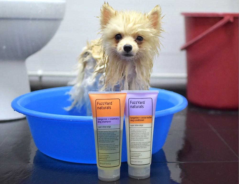 Bailey the Pom reviews FuzzYard Shampoo and Conditioner   Vanillapup