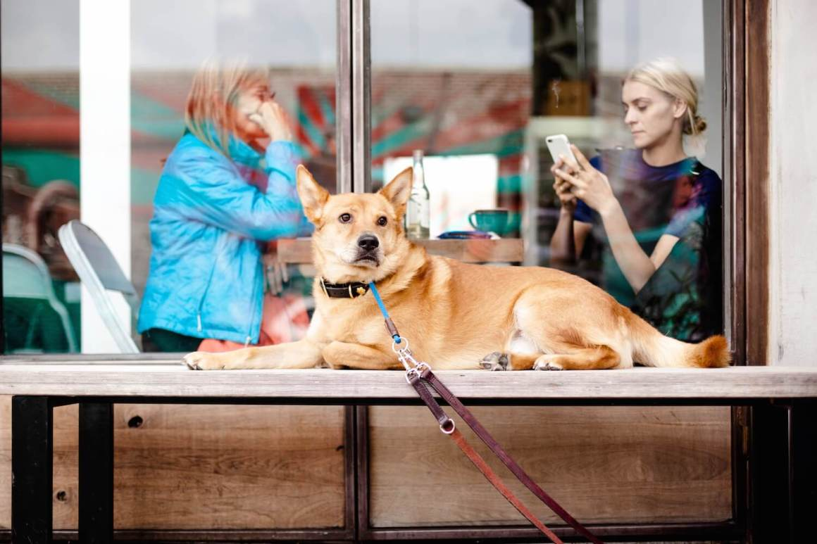 7 Tips for Dining Out With Your Dog   Vanillapup