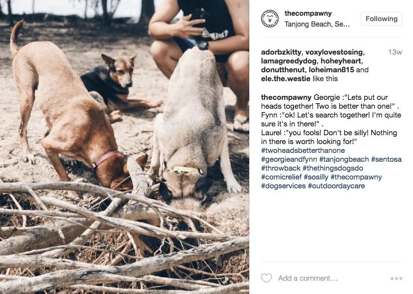 The Compawny Dog Daycare Singapore | Vanillapup