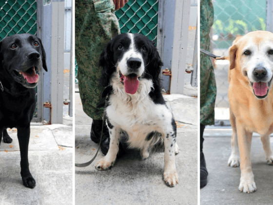 Adopt a retired police or military dog | Vanillapup