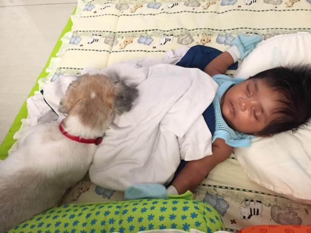 Blessy and Israel Napping | Vanillapup