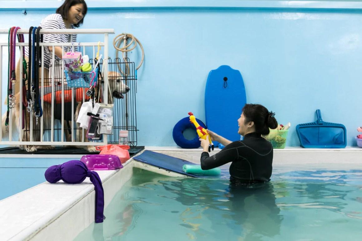 Goldie Getting Down the Pool Ramp   Vanillapup