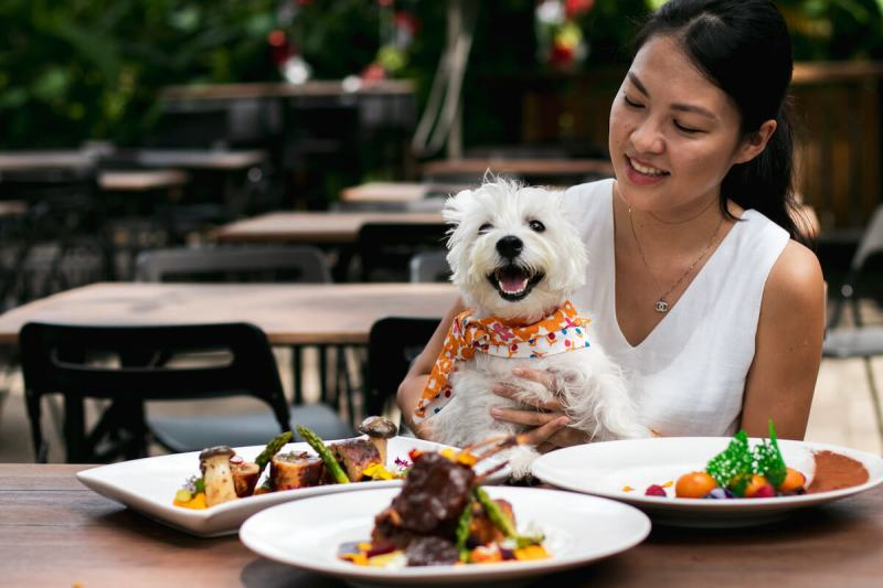 Dog-friendly RedDot BrewHouse Dempsey | Vanillapup