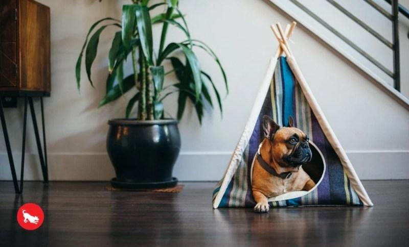 Dog in P.L.A.Y. Horizon Pet Teepee   Vanillapup