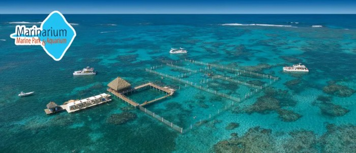 Marinarium Excursions - Reef Explorer things to do in punta cana