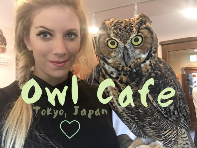 Everything You Need To Know About The Owl Cafe In Tokyo, Japan