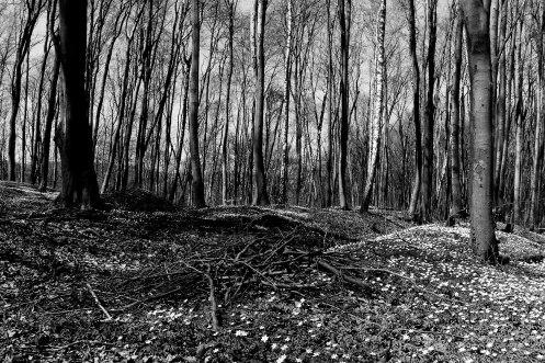 Unmarked mass graves, Lysynychi forest near Lviv (Lwów, Lemberg), Galicia, Ukraine, 2013