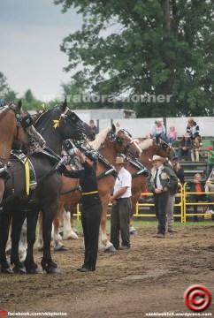 maradora horner 2014 vkh fair 12