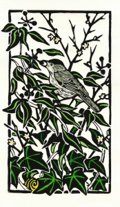 Blackcap and Ivy
