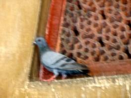 Delhi terracotta transom and pigeon