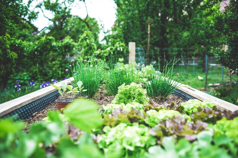 Vegetable Gardebn