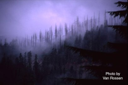Mt St Helen Ghost Forest