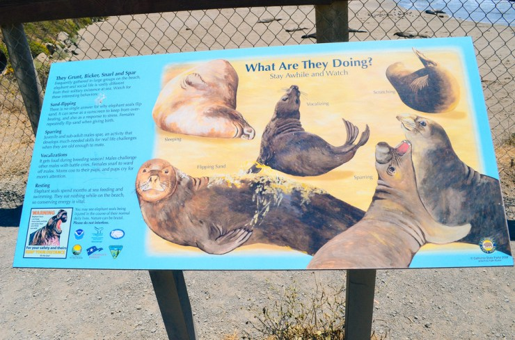 San Simeon Elephant Seals-5.jpg