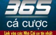 365cacuoc - Website liên kết vào bóng 1gom tổng hợp