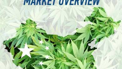 china canabis market overview