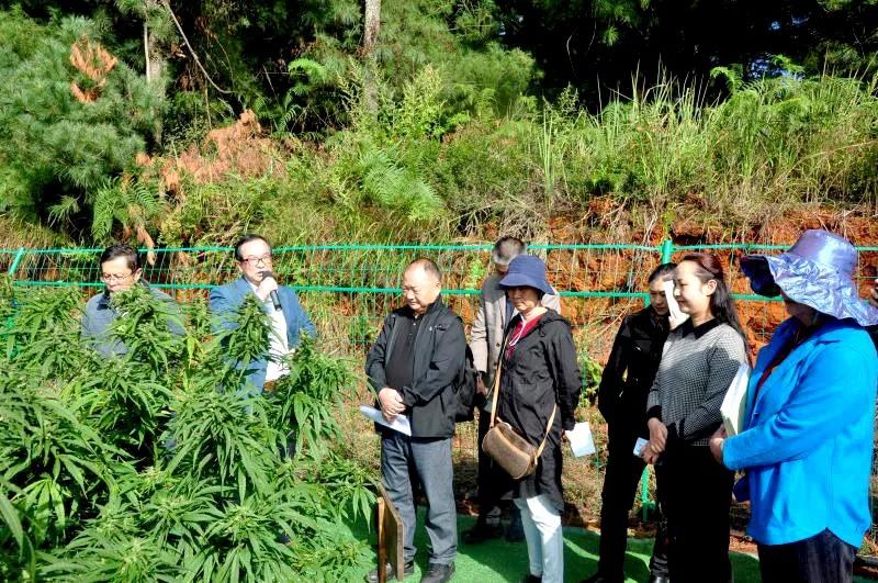 HMI Group new high-phenol hemp comes out