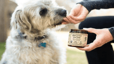 How Can CBD Dog Treats Help With Distemper?