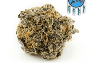 Why Blue Coma Strain Is So Popular