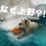 "VapeMania が ""新宿"" から ""上野"" へ移転します"