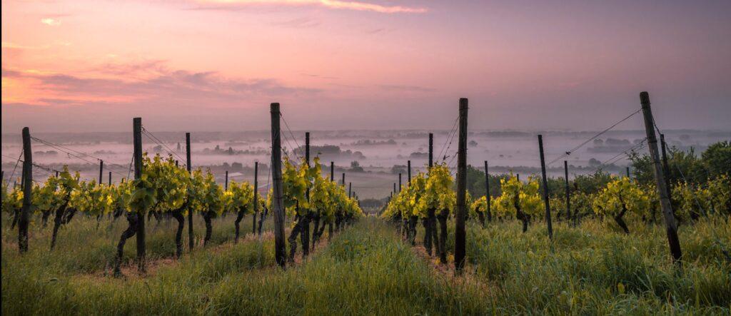 Ruta del vino Aguascalientes