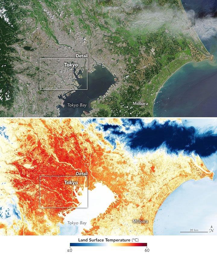 Isla de calor en Tokio durante los Juegos Olímpicos