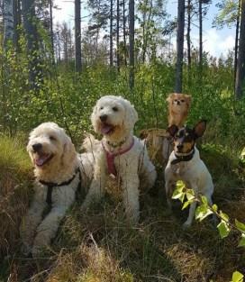 Vackra hundar och vacker omgivning
