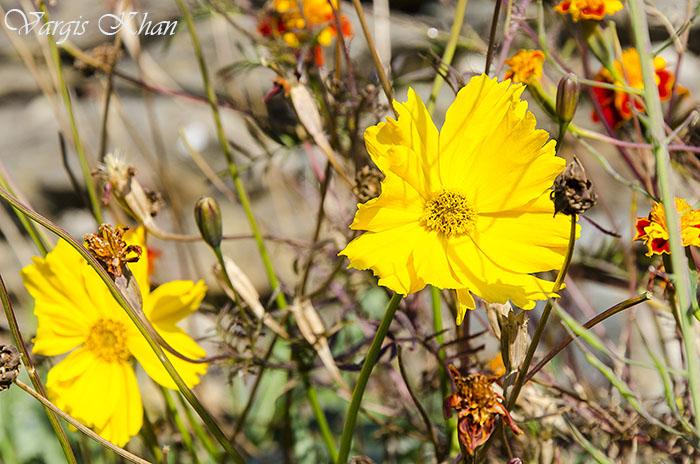 vargis-khan-flower-photography-2